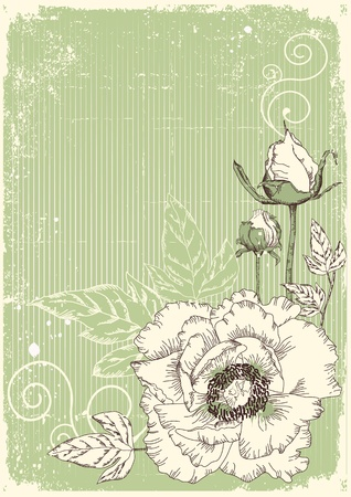 vintage postcard: Vintage flowers postcard for text.Vector floral background with grunge elements Illustration