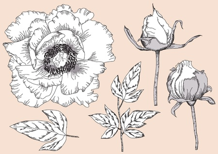 Vintage flowers for design.Isolated Hand drawn floral vector illustration Vector