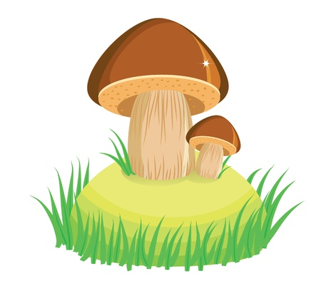 mushrooms and green grass.Vector cartoon Illustration on white