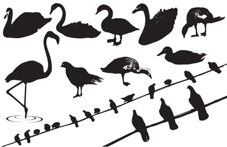 swans: Black silhouettes of wild birds on white background