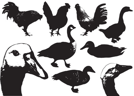 black silhouettes of farm birds on white Stock Vector - 10238343