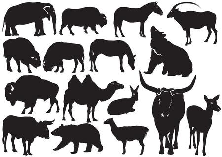 llama: Wild animals