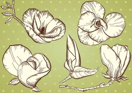 Vintage flowers for design.Isolated floral vector illustration
