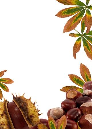 castaÑas: castañas y la naturaleza leaves.Autumn marco de fondo para el texto en blanco Foto de archivo