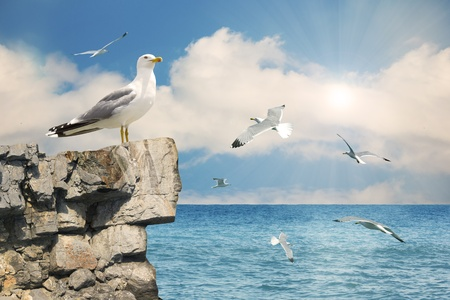 sea gull: Seagulls in the sky.Nature seascape background  Stock Photo