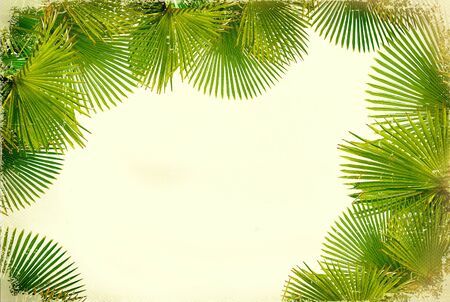 coconut leaf: Tropical green palms on white vintage background for text