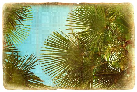 Green palms on vintage old paper texture  photo