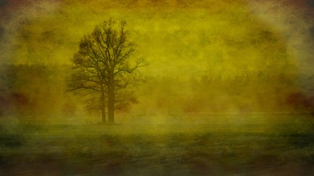 Lonely tree in fog photo