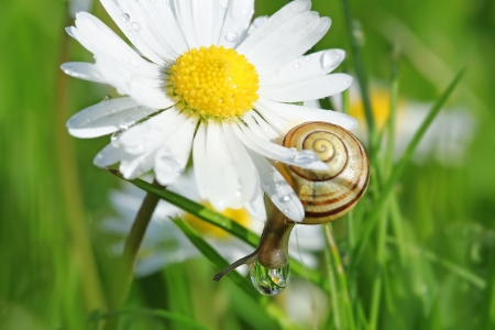 king fern: Snail on a petal