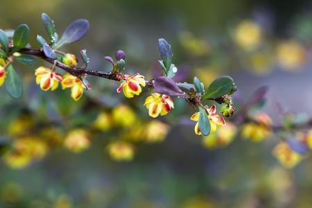 Spring buds Stock Photo - 21766350