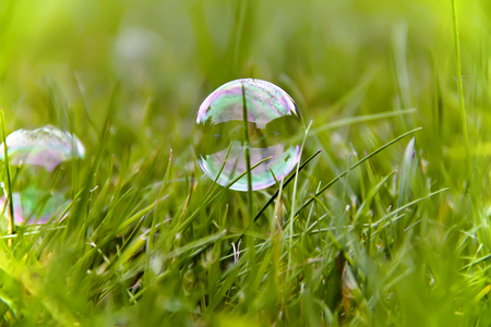 Soap bubble in the meadow Stock Photo - 23215034