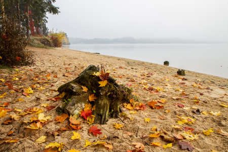 Leaves of the tree by the lake photo