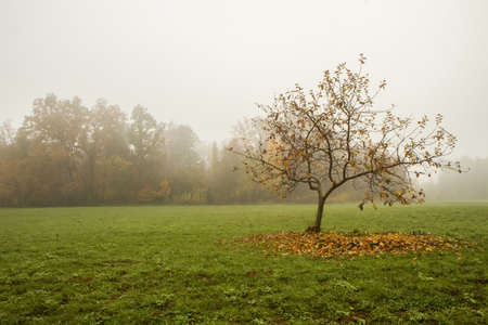 Tree in the fog photo