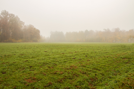 fields in the fog photo