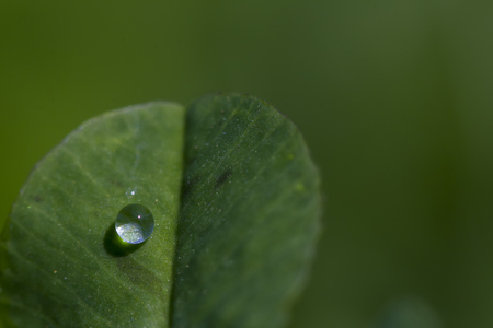 king fern: Plant leaf with one dew drops
