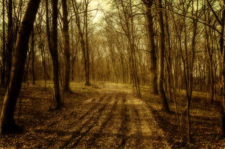 kaunas: forest road