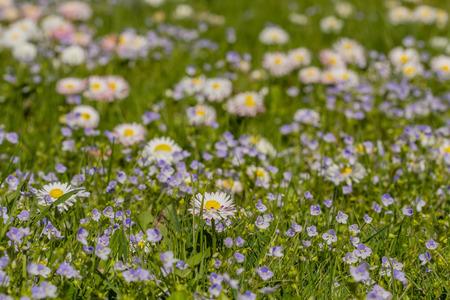 nice small meadow flowers macro photo