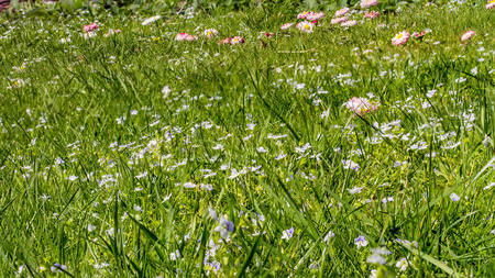 grass in may photo