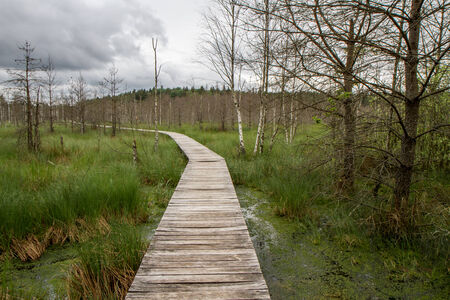 sear: road to swamp