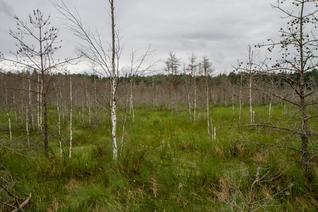 viscosity: View of swamp Stock Photo