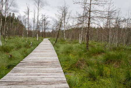 sear: Wooden Path in swamp Stock Photo