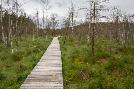 viscosity:  trail through the swamp
