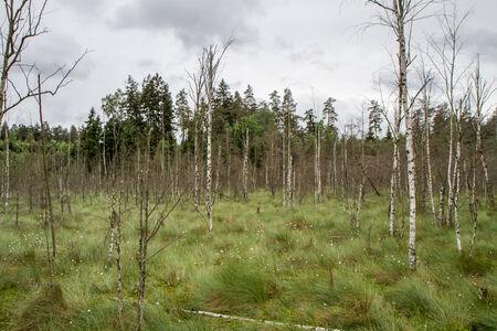 sear: gloomy swamp Stock Photo