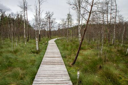 sear: trail of swamp