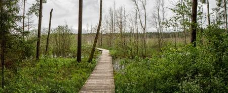 sear: road to gloomy swamp