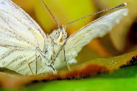 vlinder makro Stockfoto