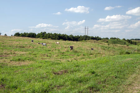 grazed: Pasture grazed by cattle herd