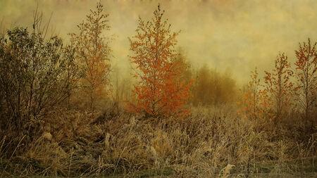 sear: autumn mist Stock Photo
