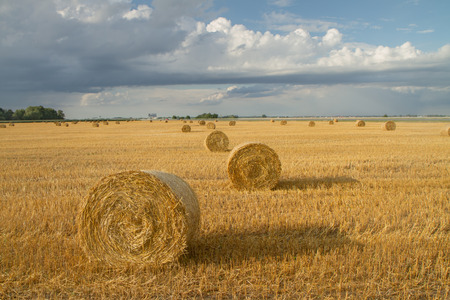 unrealistic: Hay rolls Stock Photo
