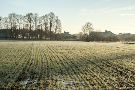 spores: Winter crop field frosted