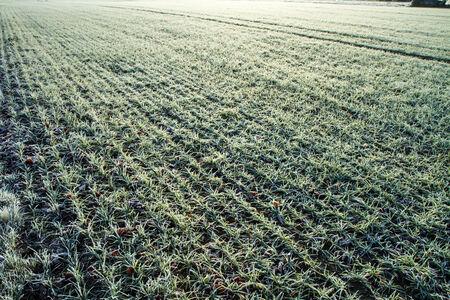 spores: farmer field