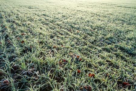 spores: field in the morning Stock Photo