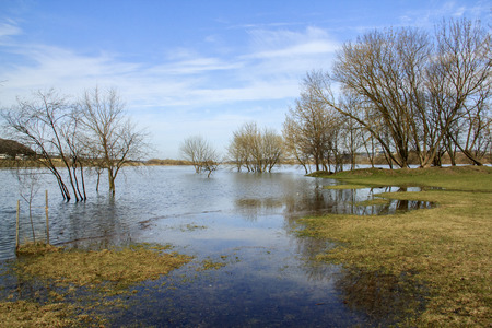 inundated: grass inundated river water