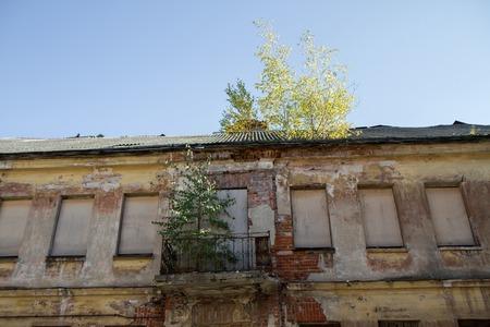 abandoned house: tree on a house wall