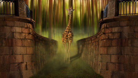magical forest: giraffe out of the magical forest