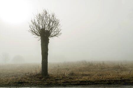 small tree: small tree Stock Photo