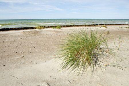 uninhabited: bent on the sand
