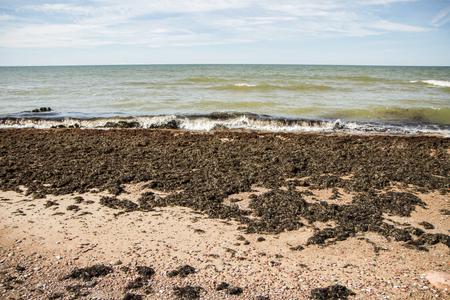 Sea dirt on beach