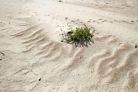 uninhabited: grass on sand