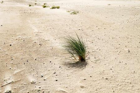 uninhabited: grass