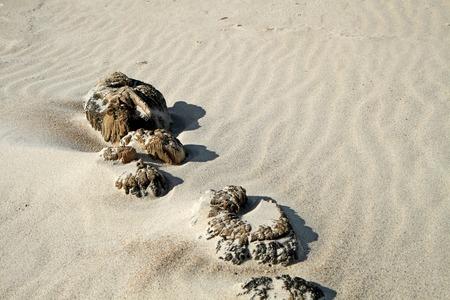 uninhabited: Old wood on sand
