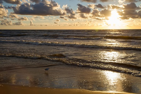 gold coast: Summer