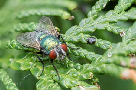 macro: fly macro