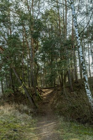 forest path: The narrow forest path