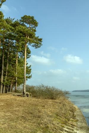 lagoon: Tree near Kaunas Lagoon Stock Photo
