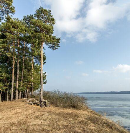 lagoon: Old tree near Lagoon
